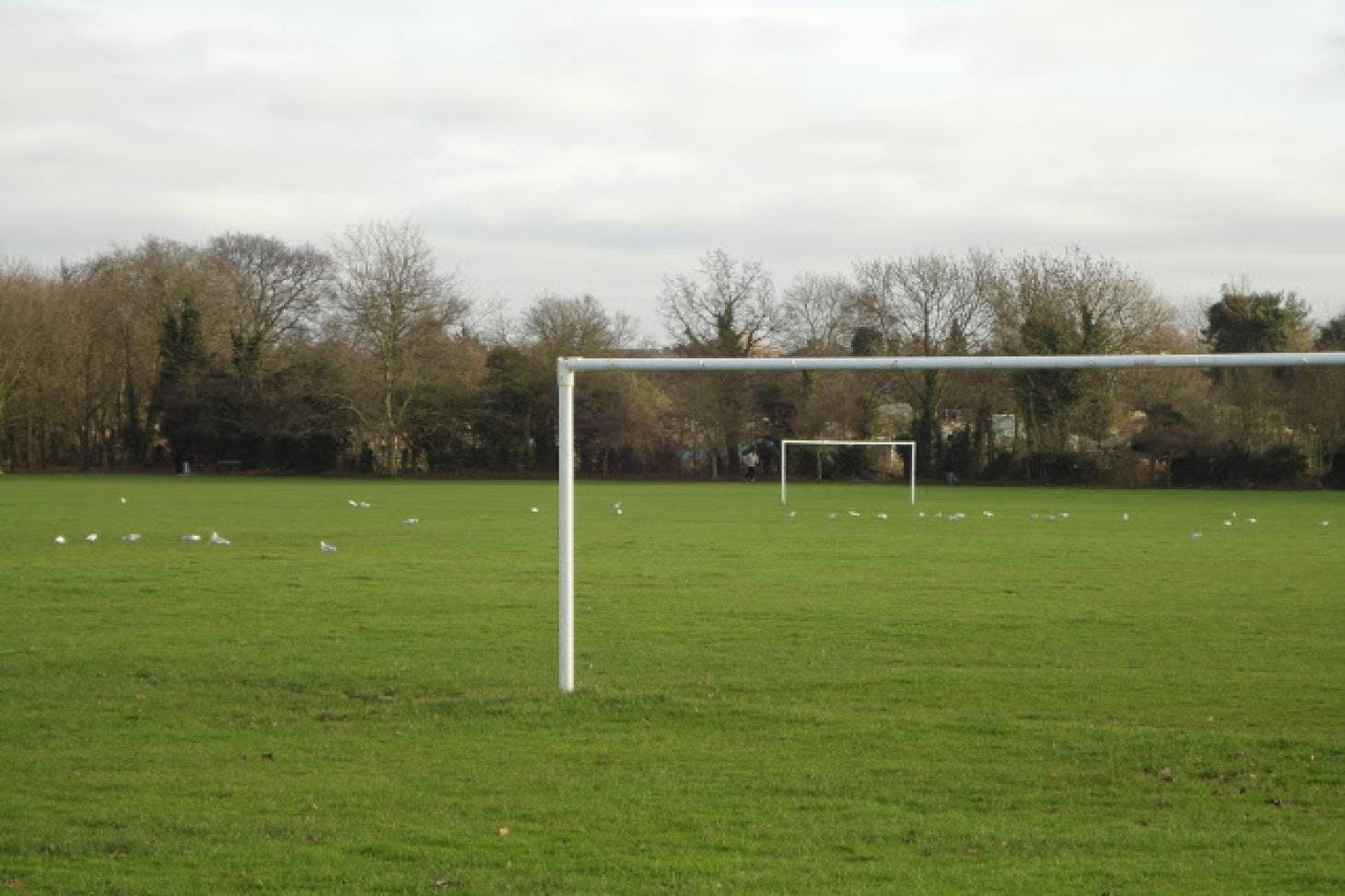Headstone Manor Recreation Ground 11 a side | Grass football pitch